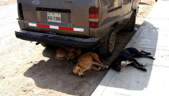 20150604 dogs 21cm DSC06905