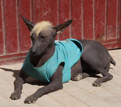 20150606 dog 15cm DSC07640