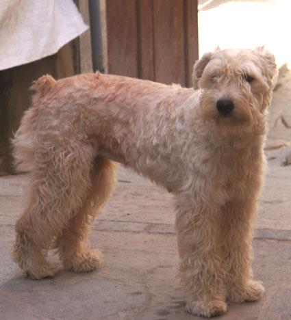 20150607 dog 15cm DSC07687