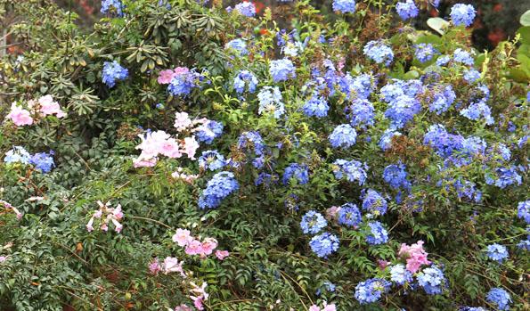 20150605 flower 21cm DSC05879