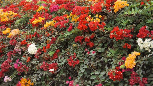 20150605 flower 21cm DSC06066