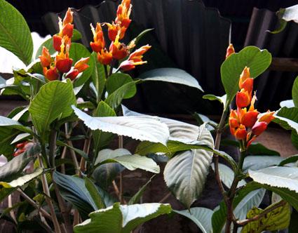20150608 flower 15cm DSC07755