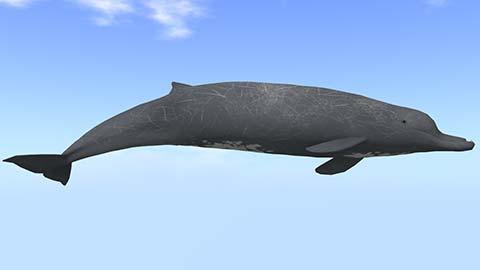 ツチクジラ完成