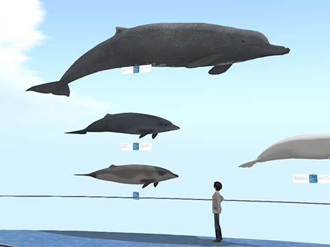 ツチクジラ販売開始