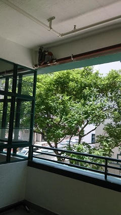 PMQ大きな開放窓(小1)