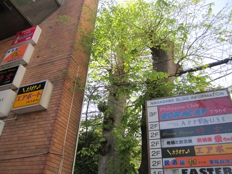IMG_44842012_easter_kashiwa_easterkashiwa.jpg