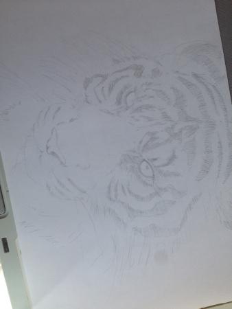 虎 鉛筆画