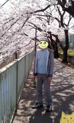 hanami2015.jpg