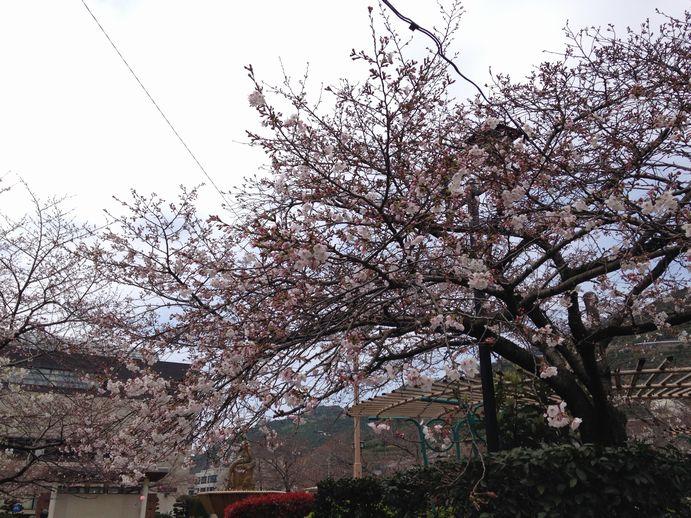 150331-01_桜