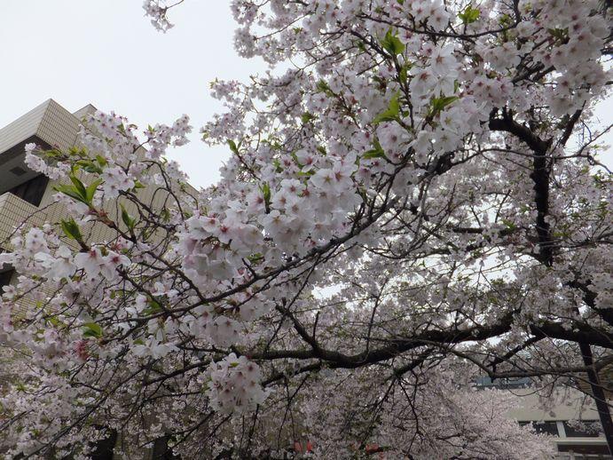 150405-02_北浜公園