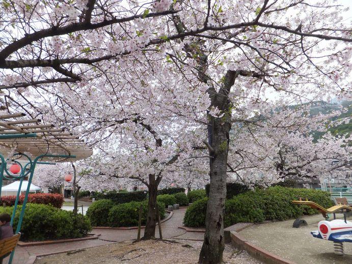 150405-03_北浜公園