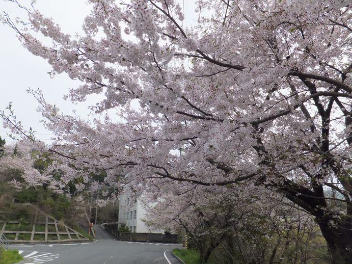 150405-05_愛宕山公園
