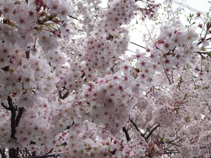 150405-06_愛宕山公園