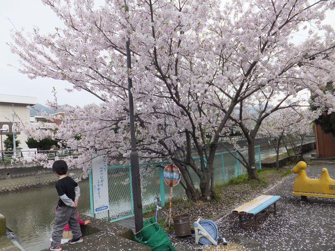 150405-21_琴平公園