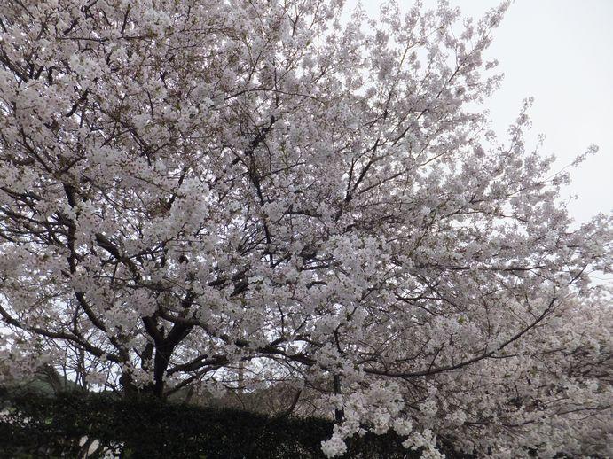 150405-29_神越公園