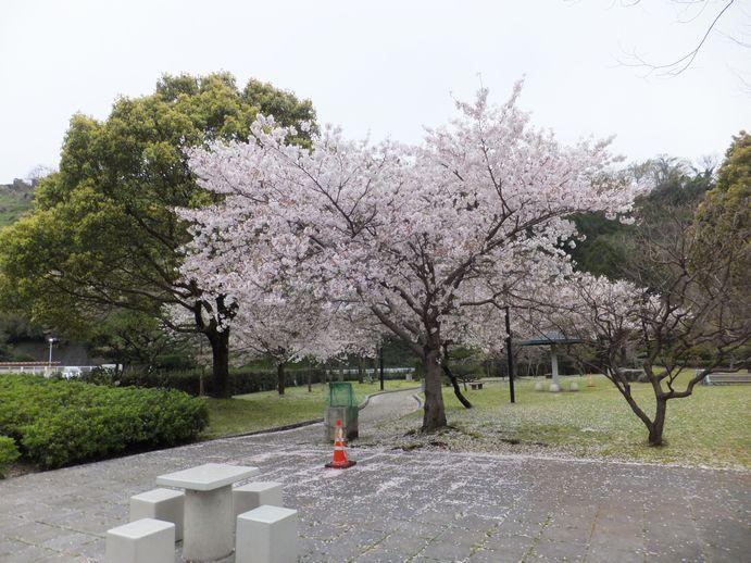 150405-30_神越公園