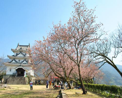 天守閣と寒桜