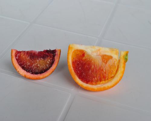 ブラッドオレンジ試食