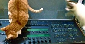 EXPANDERと猫