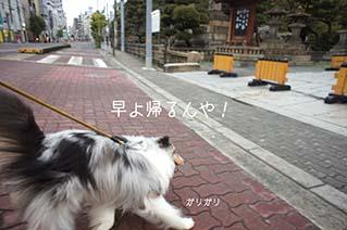 DSC02676.jpg