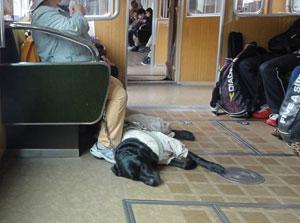 盲導犬blog01