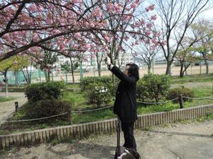 20150412城跡公園blog00