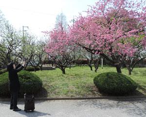 20150412城跡公園blog01