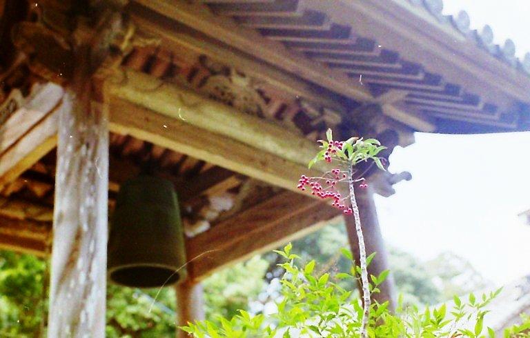 長楽寺、赤い実
