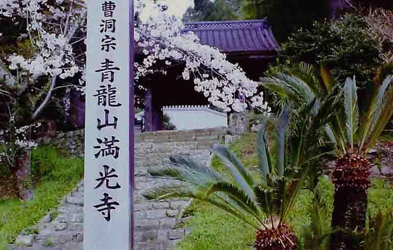 満光寺の桜