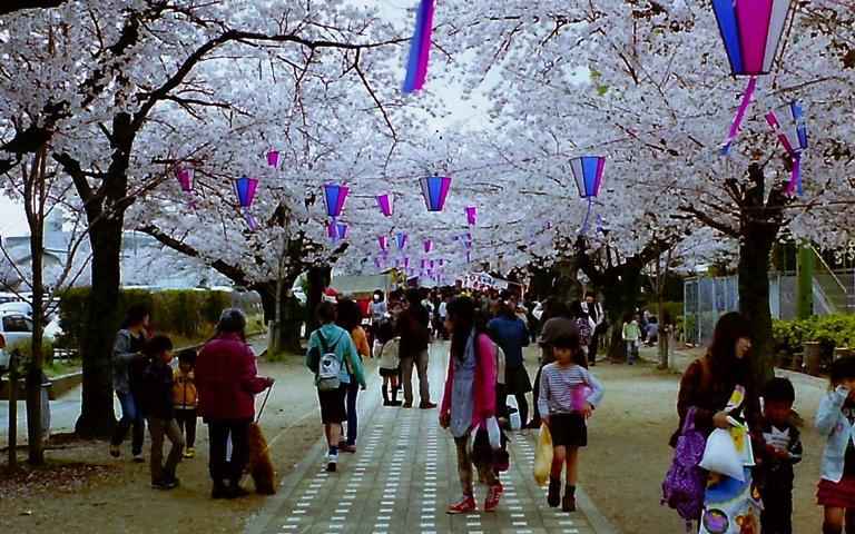 豊川桜トンネル-2