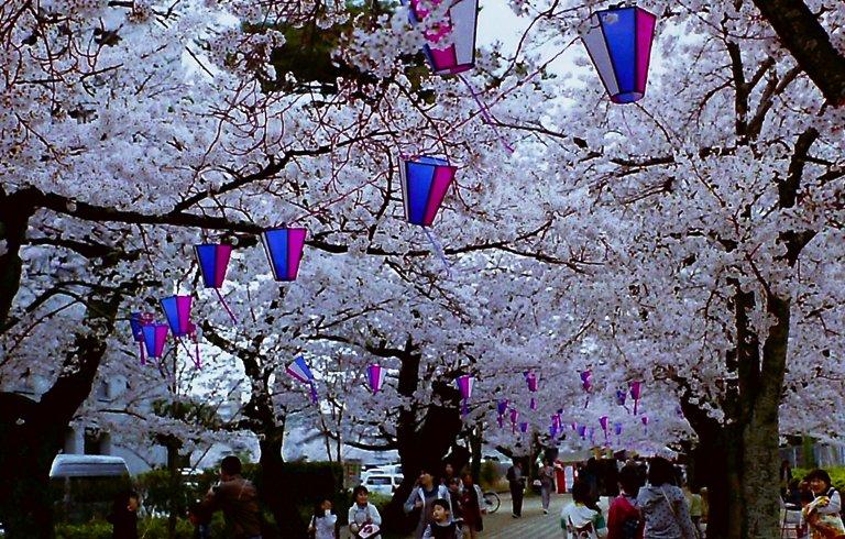2015 豊川桜トンネル-3