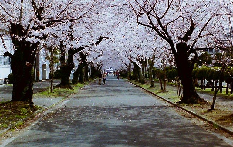 2015 豊川桜トンネル-4