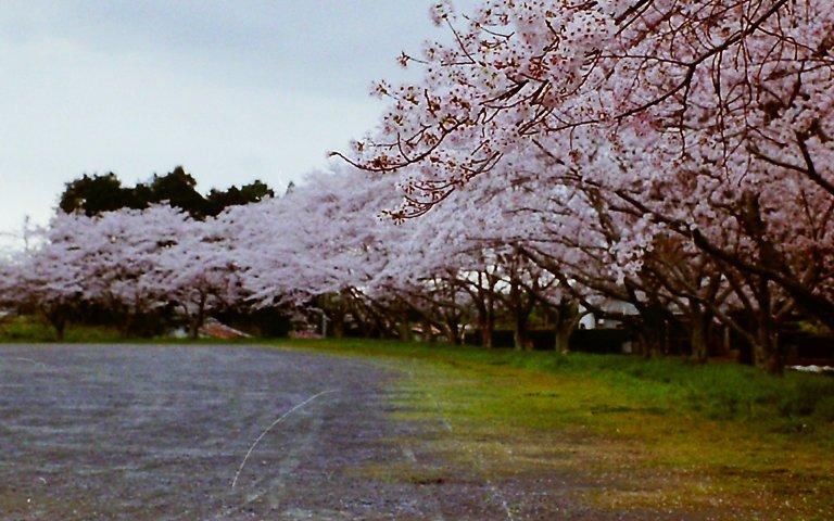 2015 桜淵公園-3