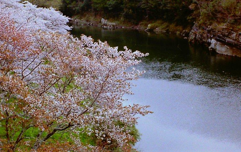 2015 桜淵公園-4