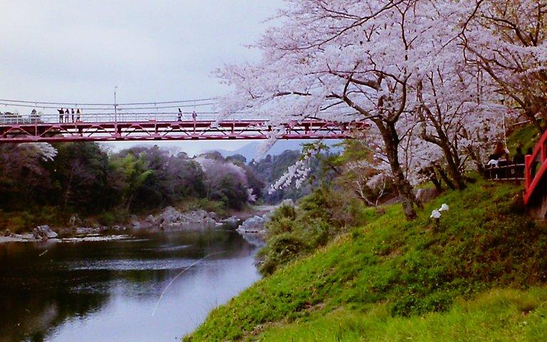 2015 桜淵公園-5