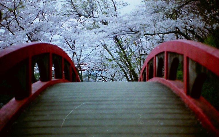 2015 桜淵公園-6