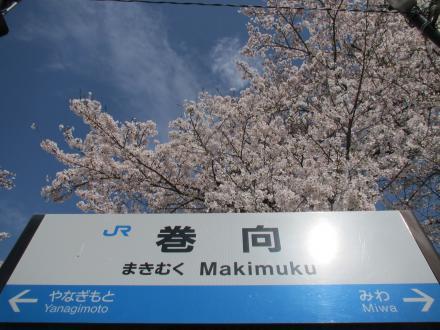 巻向駅桜2