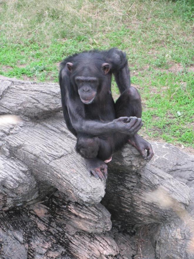 天王寺動物園20