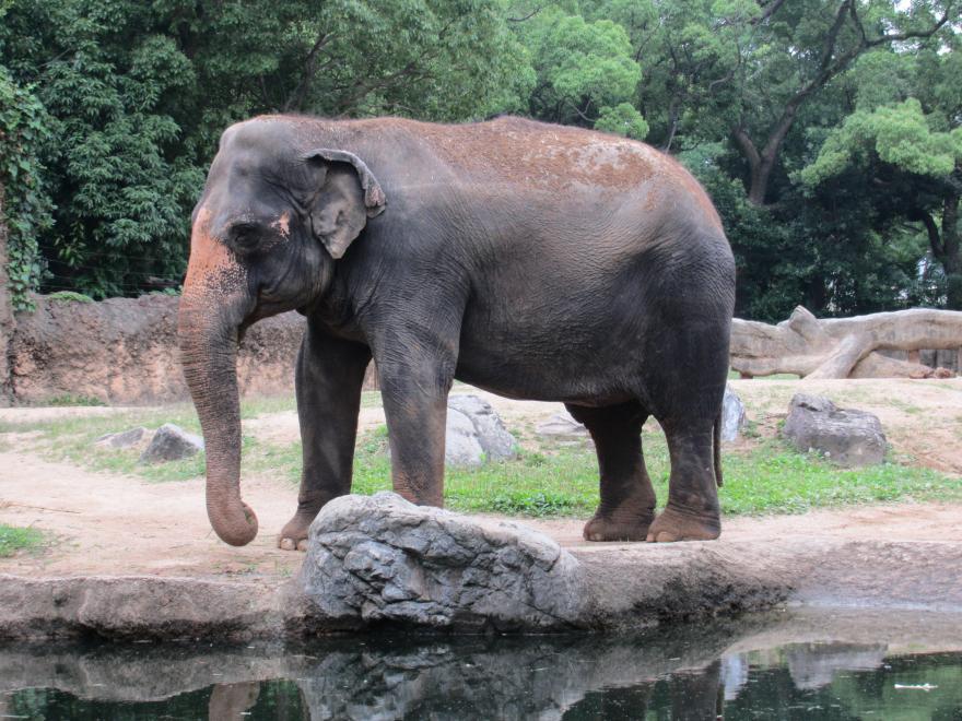 天王寺動物園18