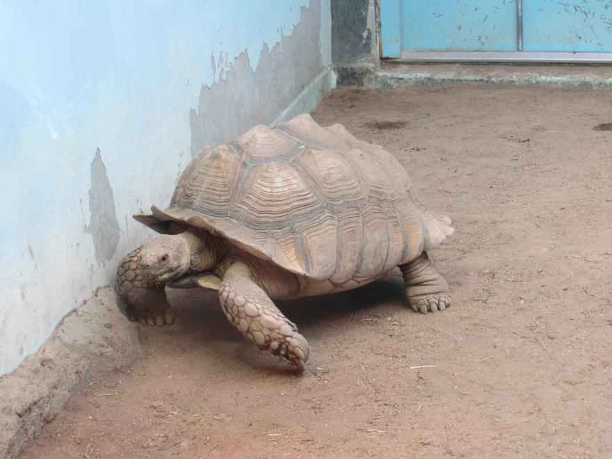 天王寺動物園13