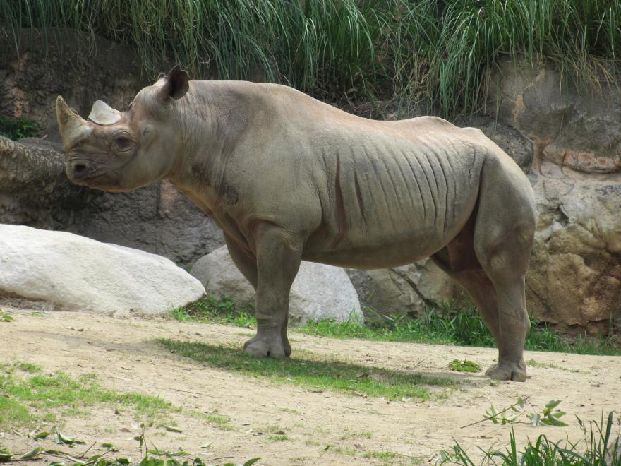 天王寺動物園12