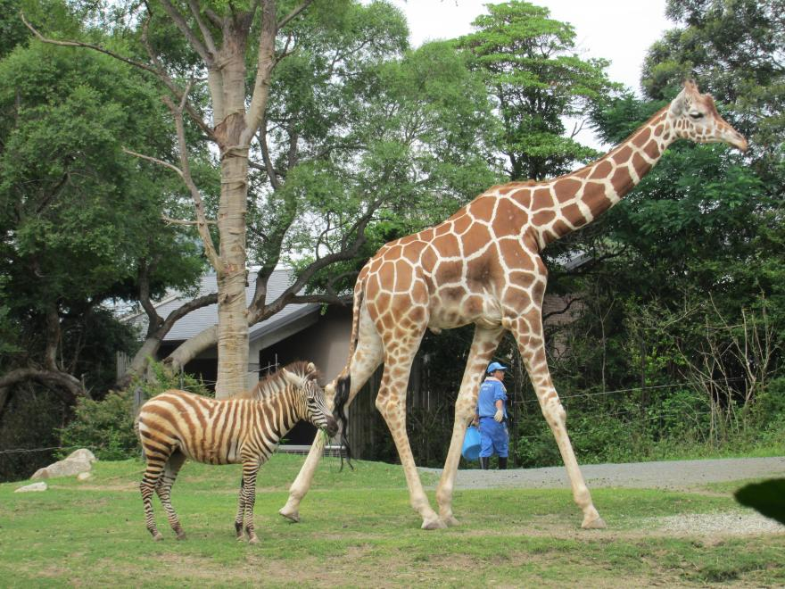 天王寺動物園11