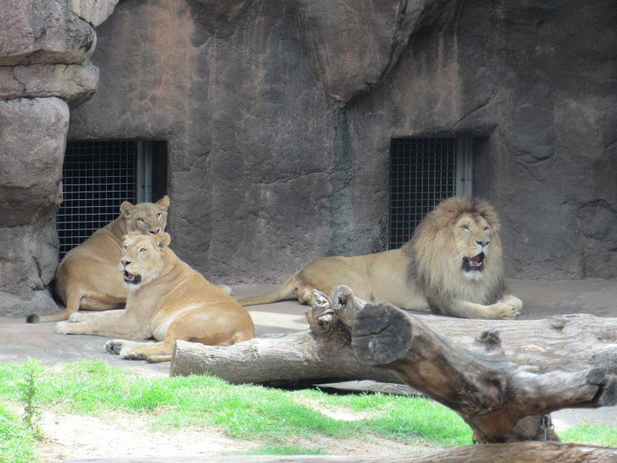 天王寺動物園10