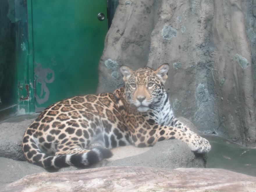 天王寺動物園07