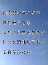KC3Z02460001 (2)-1