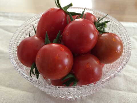家庭菜園 夏野菜 ミニトマト プチトマト 収穫 イッタラ iittala カステヘルミ