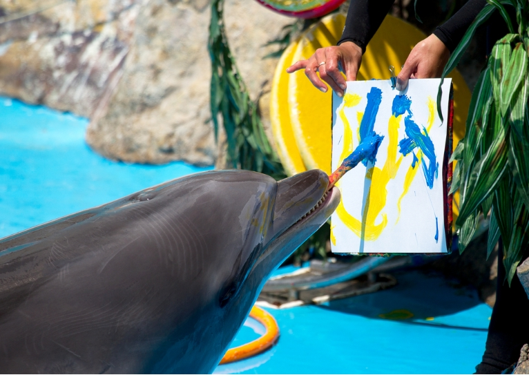 イルカの知能