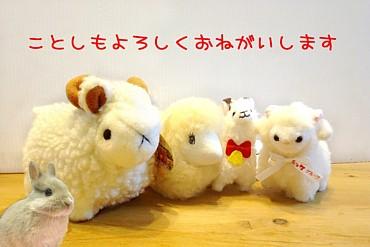 sheep5a.jpg