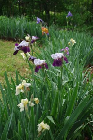 雨上がりの庭から-5, 2-15-5-7