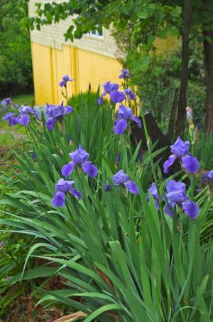 雨上がりの庭から-6, 2-15-5-7